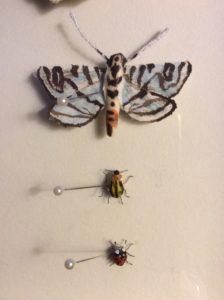 ZebraConchylodesMoth_CucumberBeetle_Ladybug
